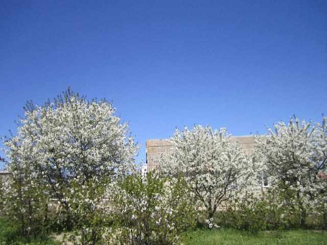 Продается земельный участок на ул. Луговая — 18 500 у.е. (фото №7)