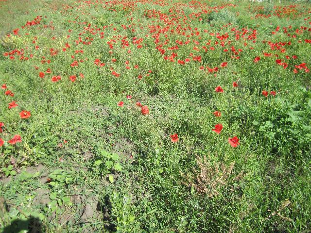 Продается земельный участок на ул. Уютная — 10 000 у.е. (фото №4)