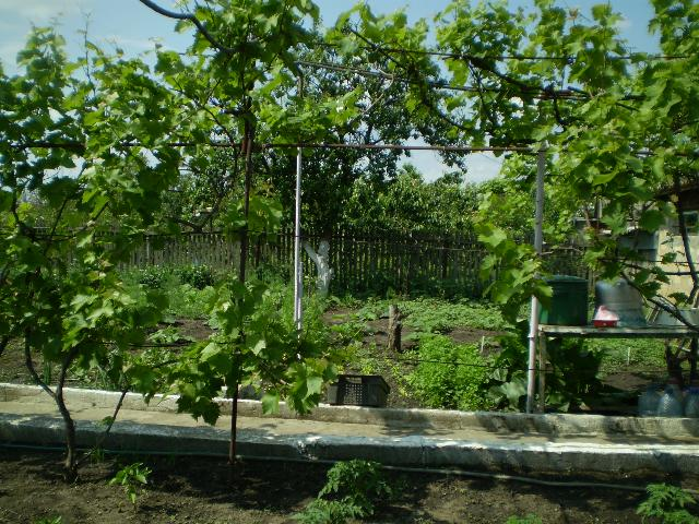 Продается дача на ул. Виноградная — 45 000 у.е. (фото №9)