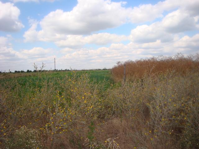 Продается земельный участок на ул. Региональная — 10 000 у.е. (фото №2)