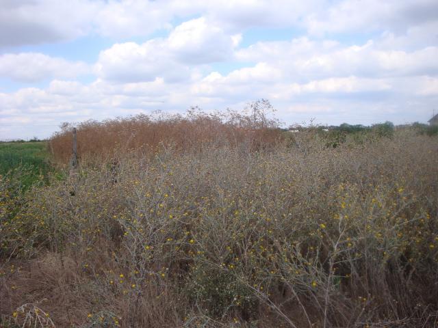 Продается земельный участок на ул. Региональная — 10 000 у.е. (фото №3)