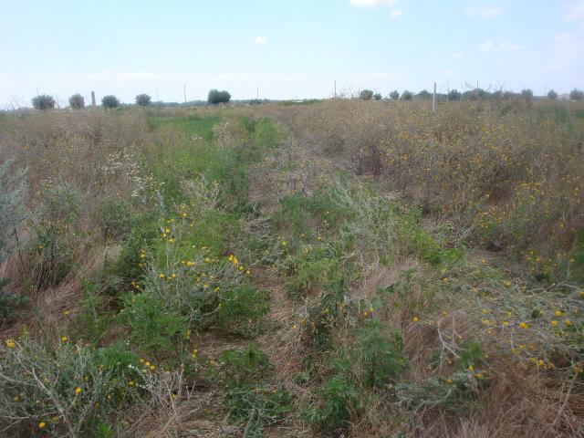 Продается земельный участок на ул. Региональная — 10 000 у.е. (фото №4)