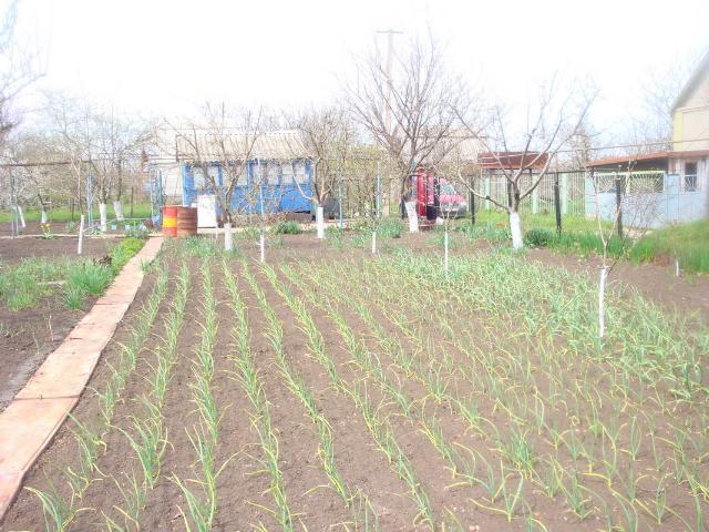 Продается земельный участок на ул. Садовая — 10 000 у.е. (фото №4)