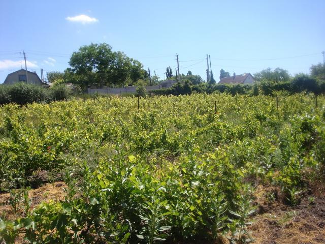 Продается земельный участок на ул. Центральная — 45 000 у.е. (фото №3)