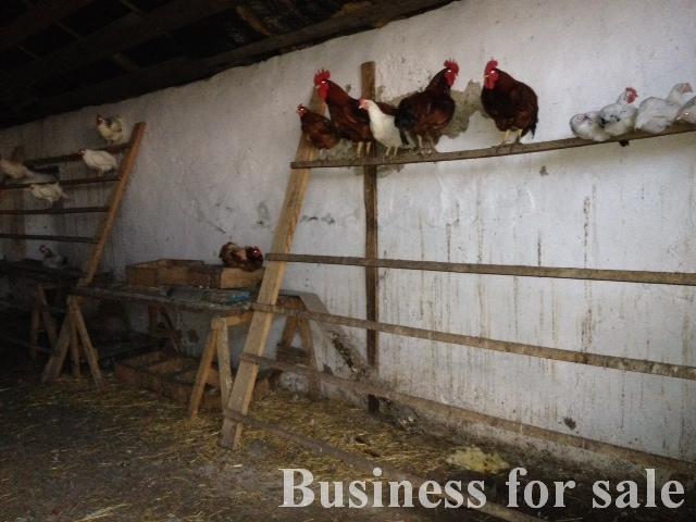 Продается Сельхозпредприятие на ул. Виноградная — 80 000 у.е. (фото №3)