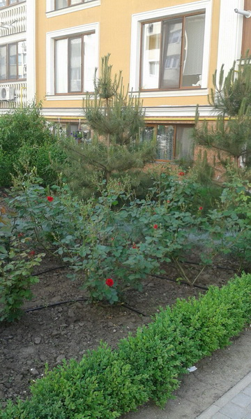 Сдается 1-комнатная квартира на ул. Говорова Марш. — 0 у.е./сут. (фото №7)