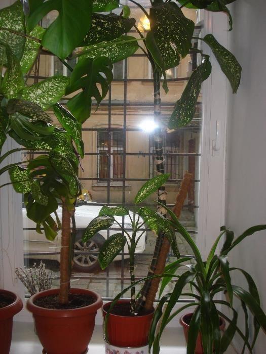 Продается 1-комнатная квартира на ул. Новосельского (Островидова) — 45 000 у.е. (фото №6)