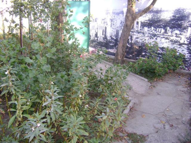 Продается дом на ул. Толбухина — 34 000 у.е. (фото №3)