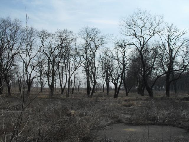 Продается земельный участок на ул. Лазурная — 12 000 у.е.