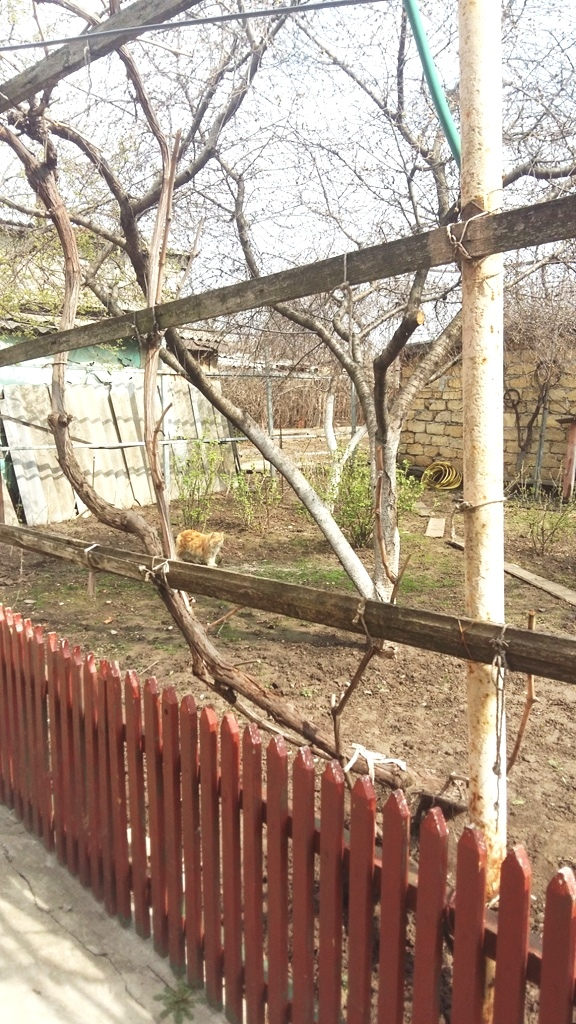 Продается дом на ул. Черкасская — 65 000 у.е. (фото №6)